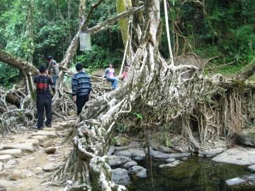 The Living Root Bridge above