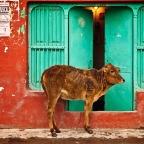 Deciphering Indian Courtesies
